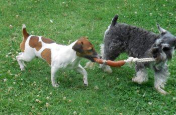 Residencias Caninas en Oquillas 14