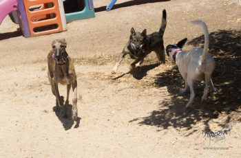 Residencias Caninas en La Roca de la Sierra 2