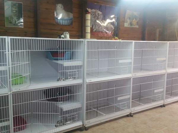Residencias Caninas en Puebla de la Calzada