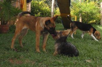Residencias Caninas en Almanza 15
