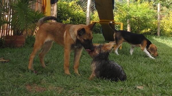 Las Mejores Residencias Caninas en Portezuelo