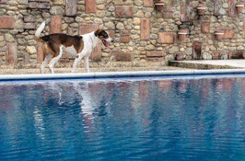 Residencias Caninas en Torrecilla del Pinar 16