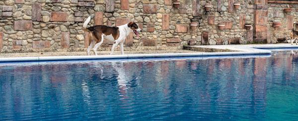 Residencias Caninas en Pomer