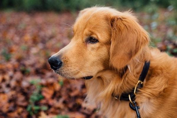 Residencias Caninas en Trasobares