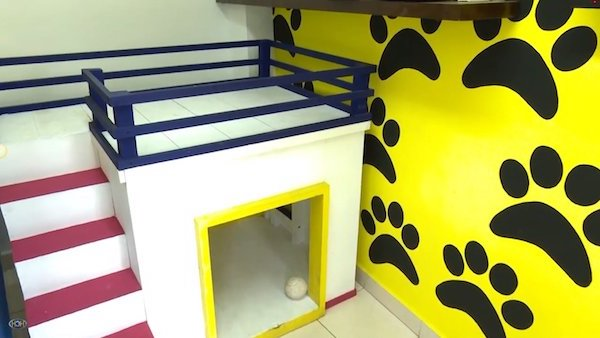 Las Mejores Residencias Caninas en Zorita