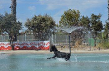 Residencias Caninas en Castil de Peones 17