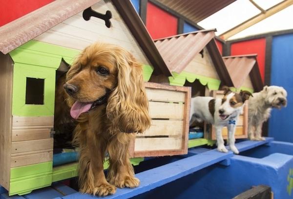 Residencias Caninas en Cadalso