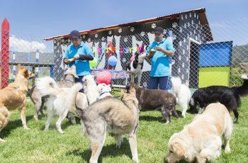 Residencias Caninas en Ajofrin 18