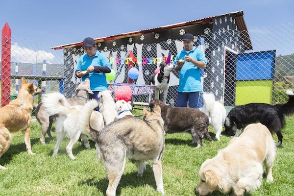 Residencias Caninas en La Almarcha