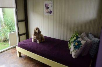 Residencias Caninas en Magan 14