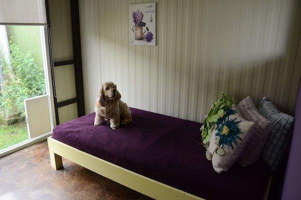 Residencias Caninas en Santa Maria del Campo