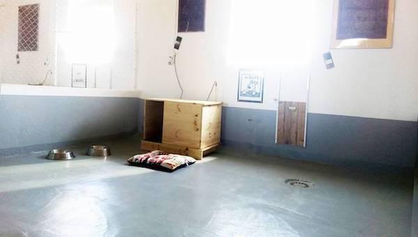 Las Mejores Residencias Caninas en Valdehuncar