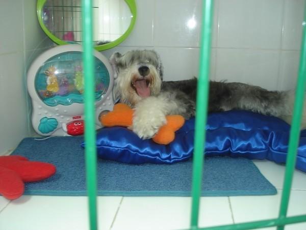 Residencias Caninas en Ibrillos