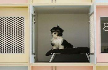 Residencias Caninas en Garai 18