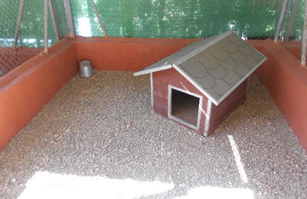 Residencias Caninas en Encinillas