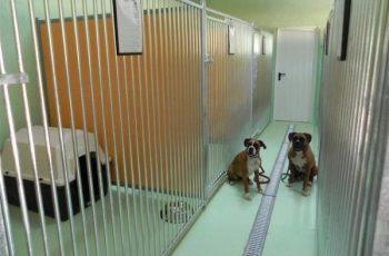 Residencias Caninas en Molinos 4