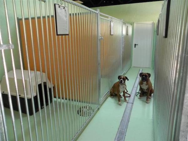 Las Mejores Residencias Caninas en Sopelana