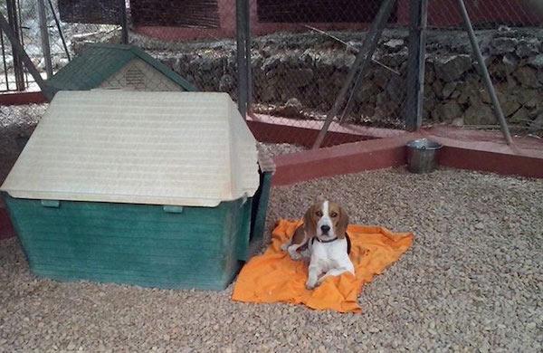 Residencias Caninas en Puebla del Principe