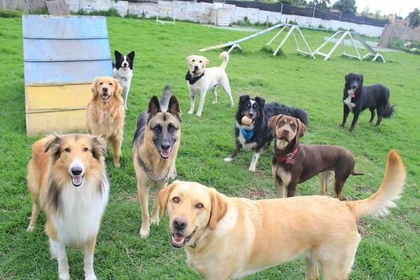 Residencias Caninas en Cantavieja