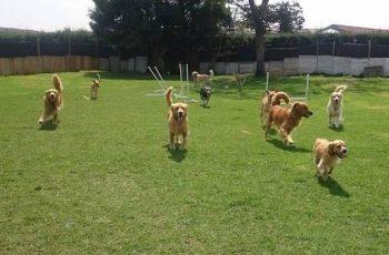 Residencias Caninas en Ea 16