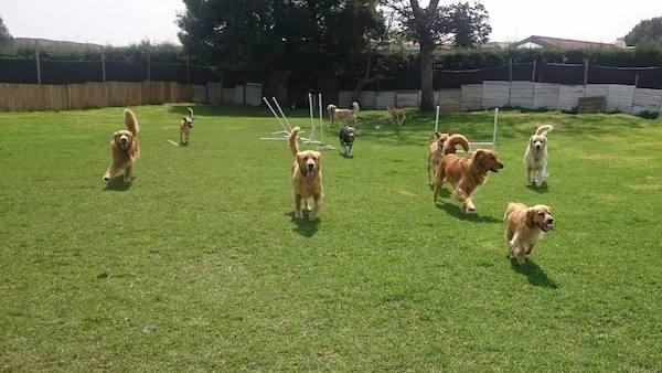 Residencias Caninas en Buenache de la Sierra