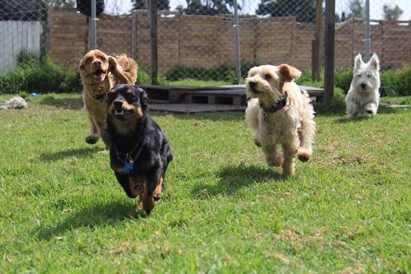 Las Mejores Residencias Caninas en Ahigal