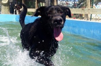Residencias Caninas en Igries 19
