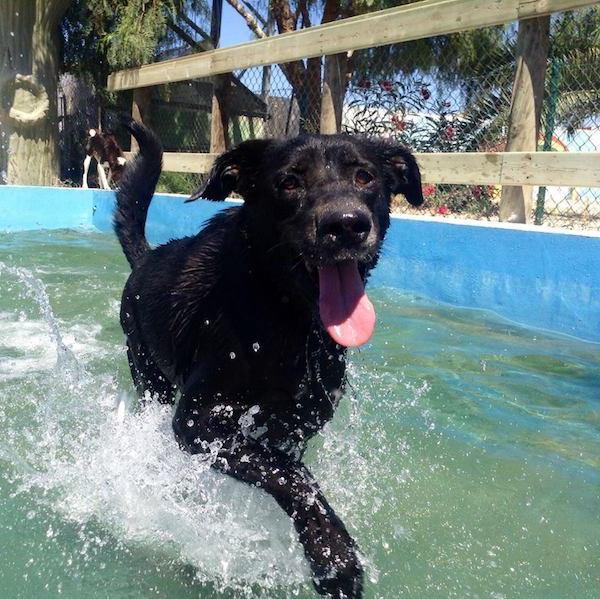 Residencias Caninas en Solarana