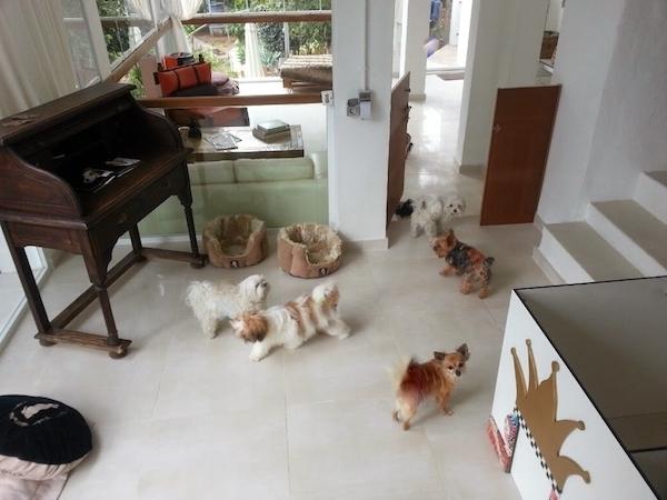 Residencias Caninas en Oliva de Merida