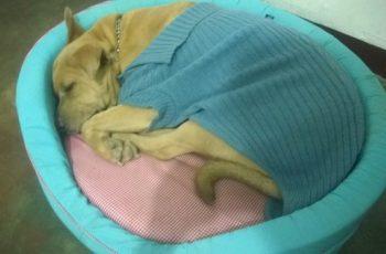 Residencias Caninas en Bermeo 14
