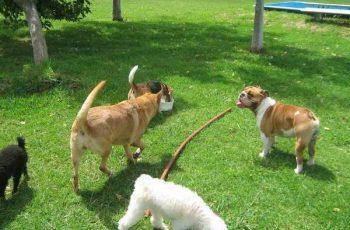 Residencias Caninas en Malcocinado 19