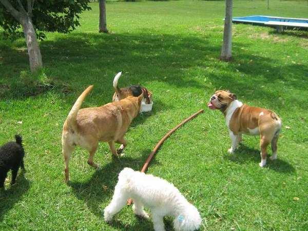 Residencias Caninas en Kortezubi