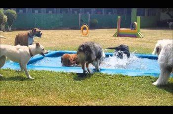 Residencias Caninas en Basauri 15
