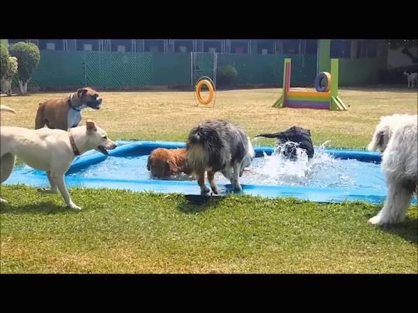 Las Mejores Residencias Caninas en Basauri