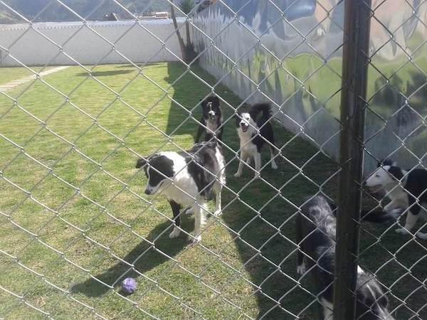 Residencias Caninas en Arrecife
