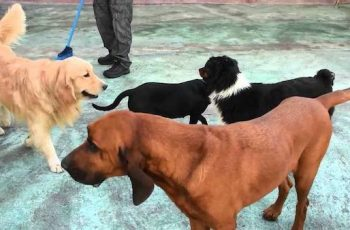 Residencias Caninas en Galdar 18