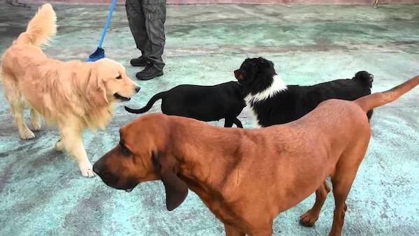 Residencias Caninas en Picon