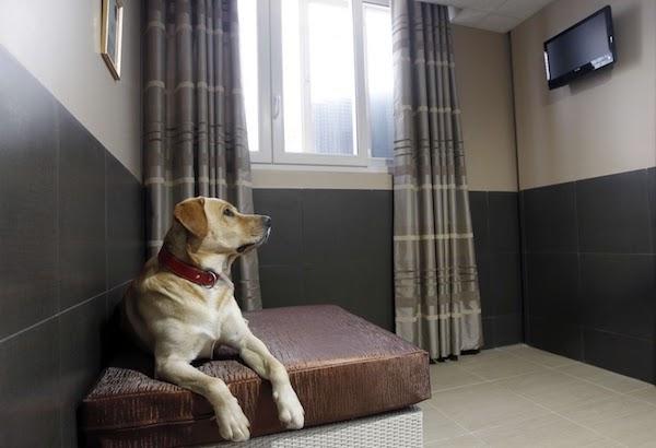 Las Mejores Residencias Caninas en Chirivel