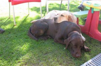 Residencias Caninas en Galve 3