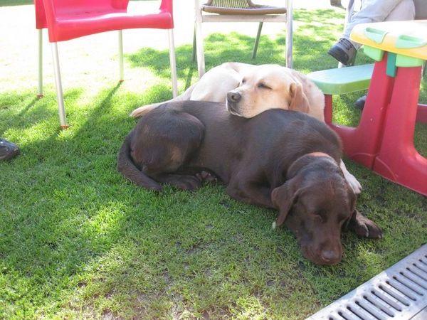 Residencias Caninas en Villalba de Duero