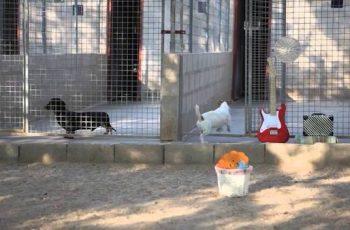 Residencias Caninas en Santa Olalla de Bureba 14