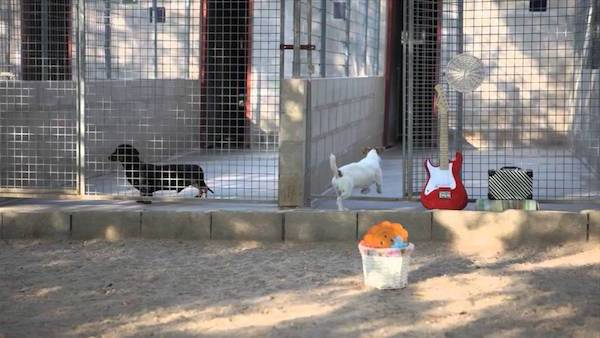 Residencias Caninas en Zierbena