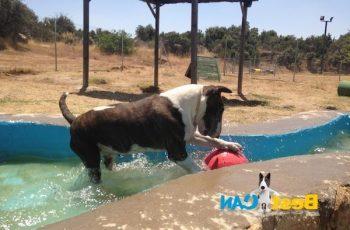 Residencias Caninas en Camunas 19