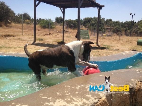 Residencias Caninas en Pinseque