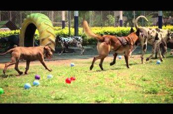 Residencias Caninas en Villanueva del Fresno 15