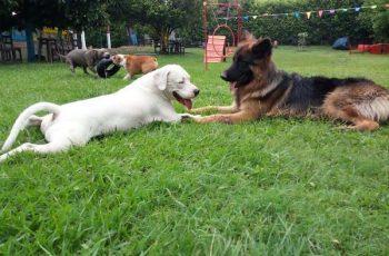 Residencias Caninas en Alacon 15