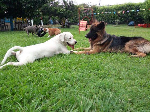 Residencias Caninas en Bagues
