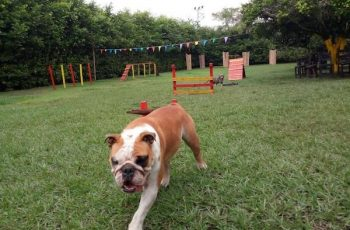 Residencias Caninas en Don Alvaro 6