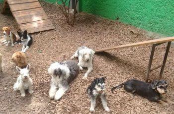 Residencias Caninas en Las Pedroneras 15