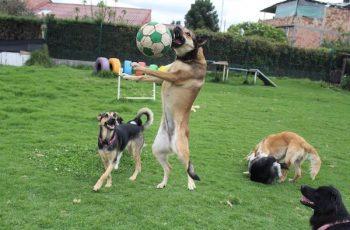 Residencias Caninas en Cordobilla de Lacara 16